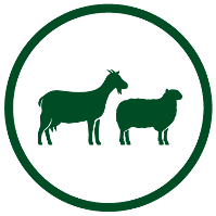 Goat and Sheep Feeds