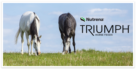 triumph 12% pelleted horse feed | nutrena